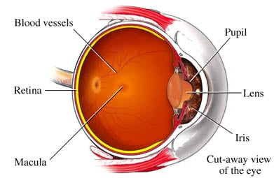 Macula Degeneration in the eye