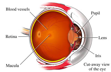 Macula Degeneration in the eye