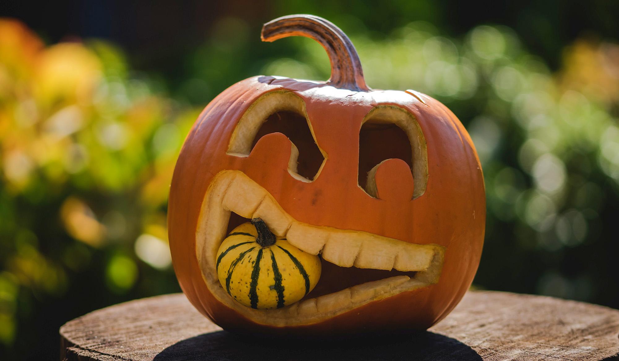 eating_pumpkin2